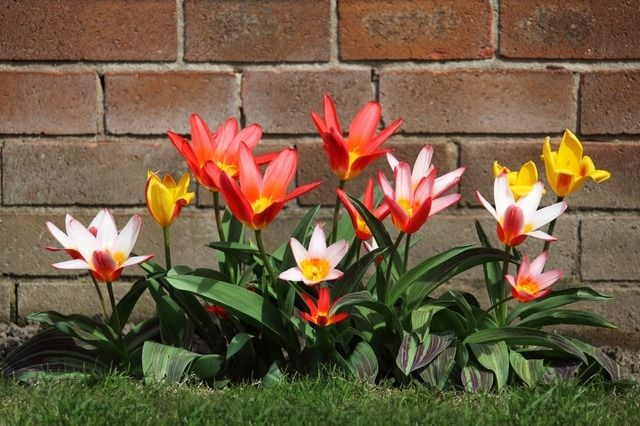 74251-Blooming-Bunch-Of-Flowers
